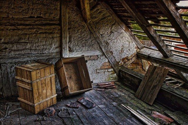 Che cosa sono le termiti del legno e quali danni comportano